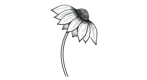 temporary tattoo echinacea ink inktion