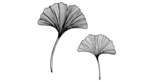 temporary-tattoo-ginko-leaves-iginko leaves temporary tattoo in black ink by inktionnk-inktion